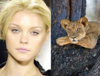 Modelos que se parecen a animales