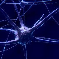 Las personas inteligentes tienen las células cerebrales más grandes de lo normal