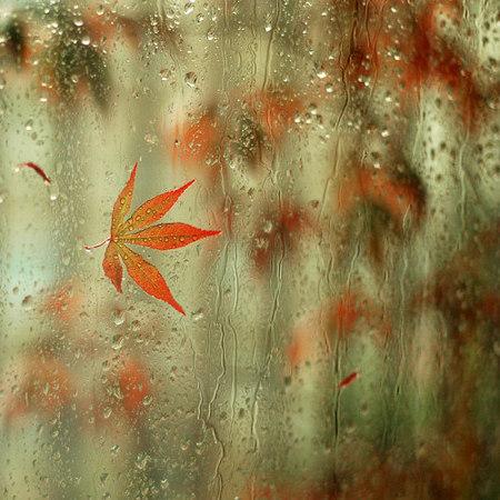 Fotografía | Agnieszka Borkowska