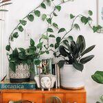 Las 11 mejores plantas de interior : resistentes, fáciles de cuidar y preciosas