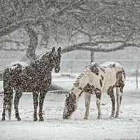 ¿Por qué el aire de nuestro alrededor se caliente cuando nieva?