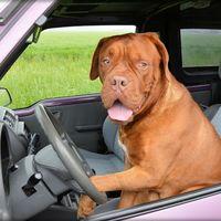 Un hombre borracho es arrestado tras enseñar a conducir a su perro, provocar dos accidentes y huir a 160 km/h
