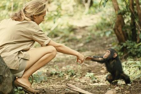La primatología parece una ciencia de mujeres, pero aún está muy lejos de serlo en realidad