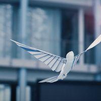 Este pájaro robot imita el aleteo y las maniobras de uno real con una agilidad sorprendente
