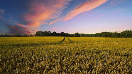A medida que aumenta el CO2, el contenido de nutrientes de muchas plantas disminuye