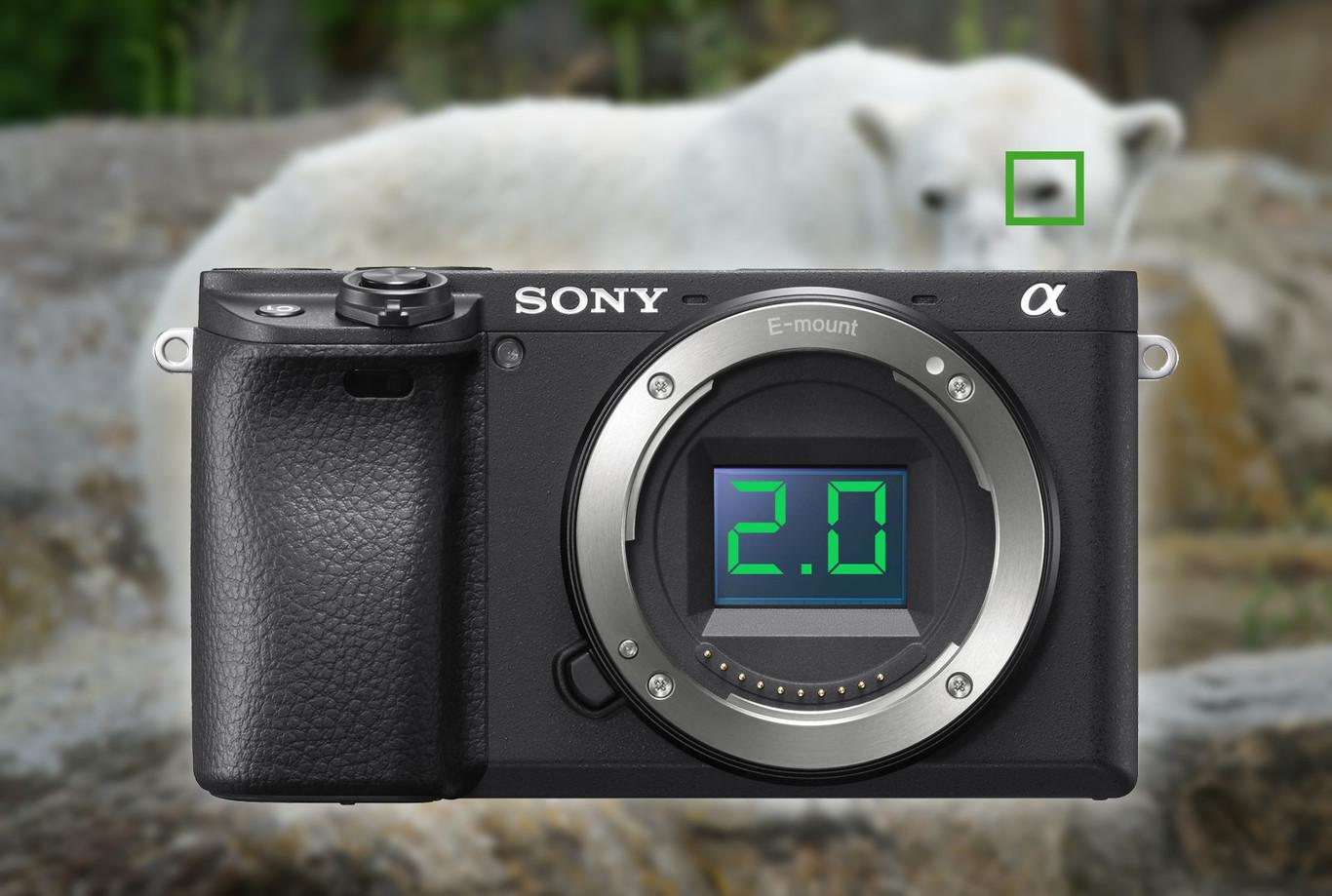 Ya disponible para descargar el el firmware 2.0 de la Sony A6400 que añade el Eye AF en tiempo real para animales