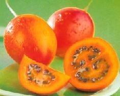 Un hermano del tomate, el tamarillo