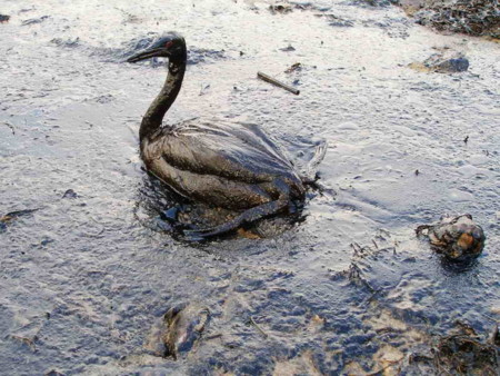 11 imágenes clave que explican cómo estamos destruyendo los océanos