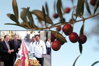 El pan de olivas arbequinas más largo del mundo