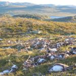 Un rayo ha matado a 300 renos en Noruega. Y no es la tormenta eléctrica más inquietante que conocemos