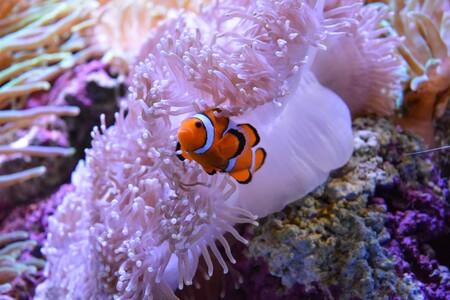 Hemos perdido 11.700 km² de coral en 10 años: el calentamiento de los océanos sigue siendo un azote, según un estudio