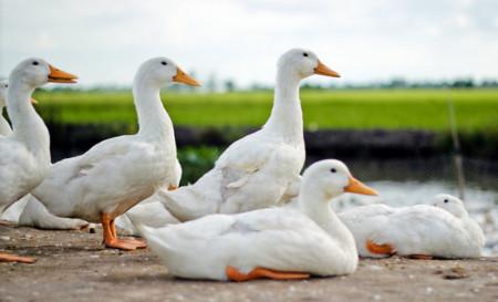 El surgir del anonimato: DuckDuckGo registra mil millones de búsquedas durante el 2013
