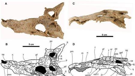 Encuentran en los Pirineos el cráneo del cocodrilo más antiguo de Europa