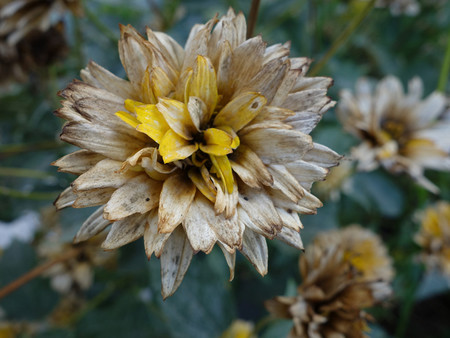 Trucos Mejores Fotos Flores 11