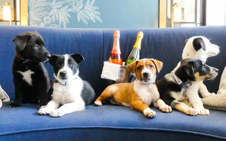En este hotel de Denver van a reservar una suite para perros y... vino