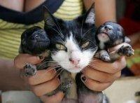 Una gata supuestamente da a luz unos perritos