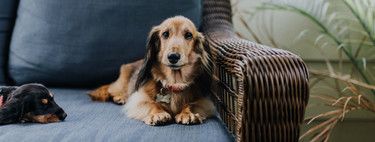 El movimiento antivacunas llega a perros, gatos y conejos: ya hay 7 millones de mascotas sin vacunar