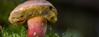 Siete recetas con setas de otoño para el Picoteo del finde