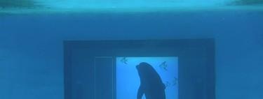A los delfines les gustan las apps e interactúan con ellas