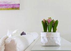 La semana decorativa: alegrar la casa con plantas, organizar bien los zapatos y viajar a Hawaii