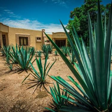 Qué tan cierto es que China produce tequila fuera de México