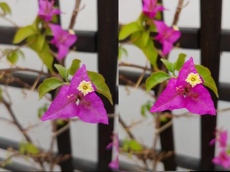 Ejemplo Flores Ai