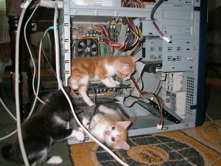 Wpid Kitty Cat Tech Support 1