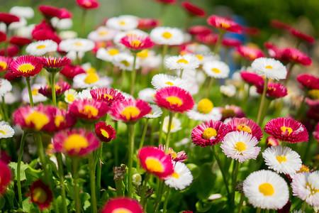 Trucos Mejores Fotos Flores 09