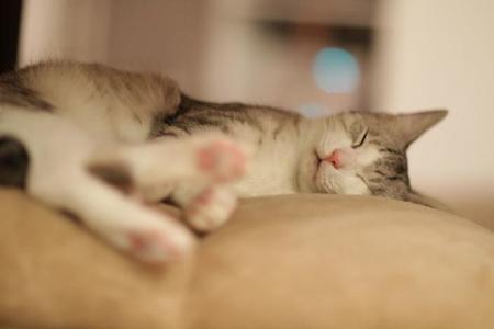 Sleeping Cutie (5847189782)
