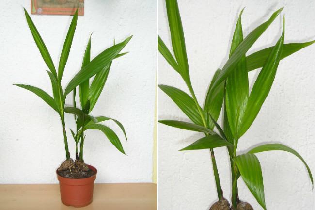 Las once mejores plantas de interior for Plantas verdes de interior