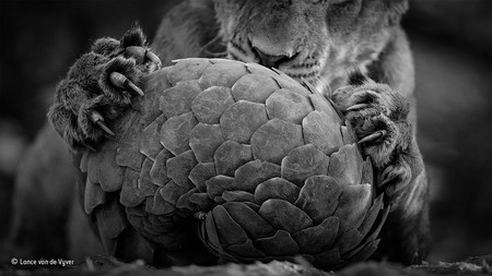 Lance Van De Vyver Wildlife Photographer Of The Year Black And White