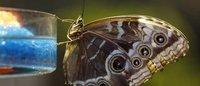 Mariposas tropicales expuestas en el Museo de Historia Natural de Nueva York