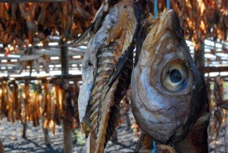 Secaderos de pescado tradicionales en Islandia