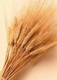 Elisa-R5, nuevo sistema para medir la cantidad de gluten
