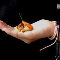 Tartar de tomate y dátil con langostino. Receta