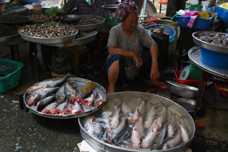 Basa Fish Vinh Long Market