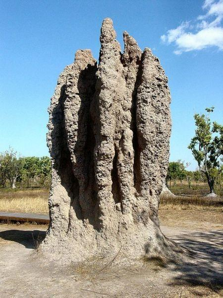 640px-termite_cathedral_dsc03570.jpg
