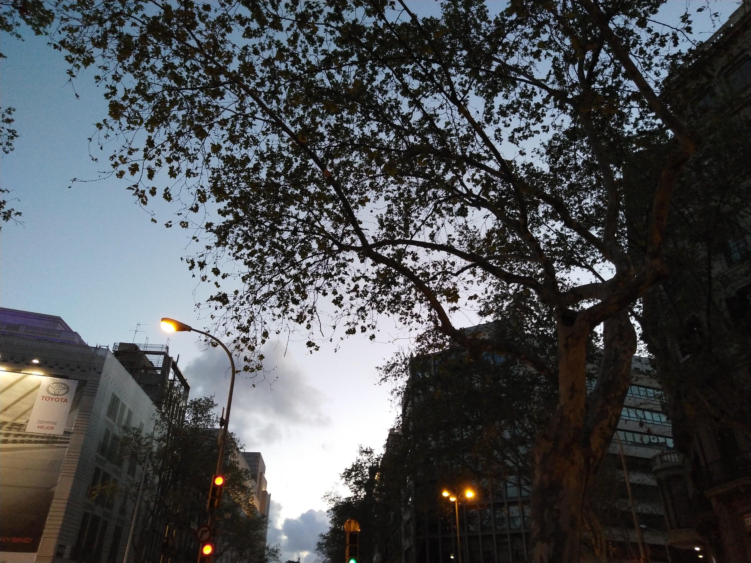 Foto de Fotografías cámara trasera del Vsmart Active 1+ (12/44)