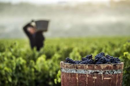 Vendimia Manual En Haro Rioja Alta C Consejo Regulador De La Denominacion De Origen Calificada Rioja