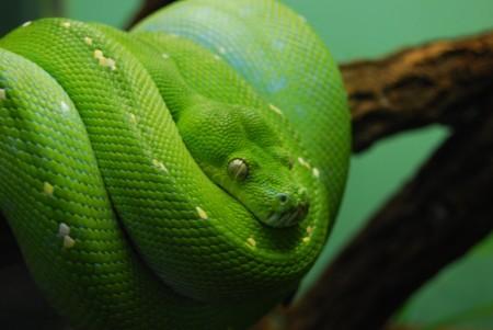 Reaccionar a la serpiente antes de verla: la reacción automática al miedo