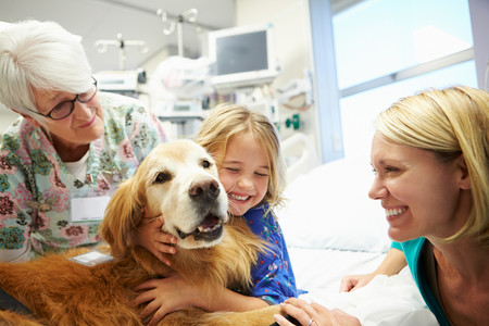 Así trabaja Zénit, el perro de terapia que ayuda a minimizar el dolor y la ansiedad de los niños hospitalizados
