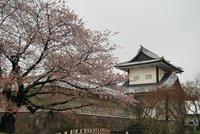 Calendario 2012 para contemplar los cerezos en flor en Japón