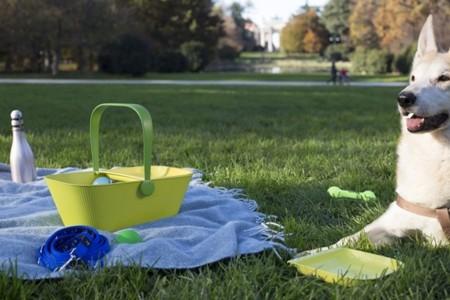 PetNic, una cesta para una jornada con vuestro amigo de cuatro patas
