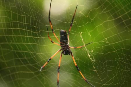 Uno de los sensores más precisos está inspirado en las arañas