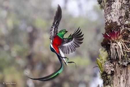 Resplendent Delivery C Tyohar Kastiel Wildlife Photographer Of The Year