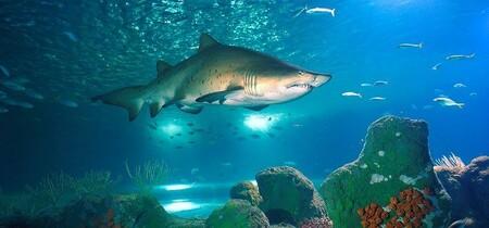 Tiburon Toro Almunecar