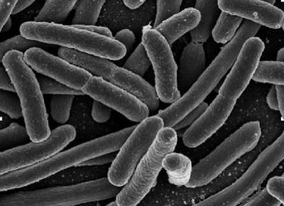 Las 5 bacterias que más amenazan al ser humano