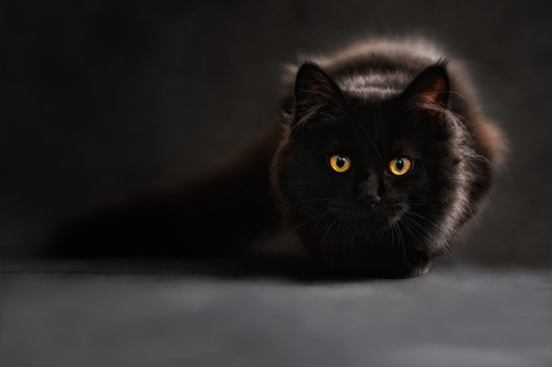 [Inocentada 2015] Cómo fotografiar a tu gato negro (con éxito)