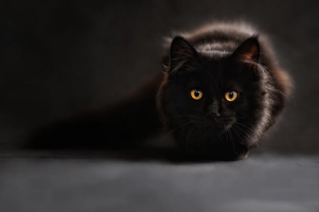 Cat 694730 1280