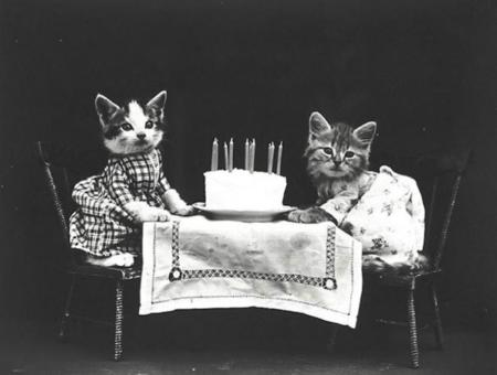 retratos de gatos epoca victoriana de Harry Whittier Frees